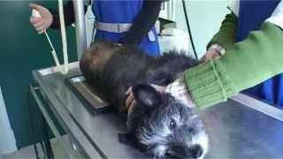 Assistant Vétérinaire - La radiologie