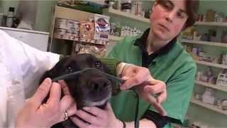 Assistant Vétérinaire - La contention