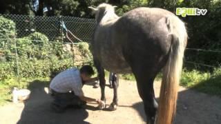 Soigner les chevaux : devenir vétérinaire Équin  !!!